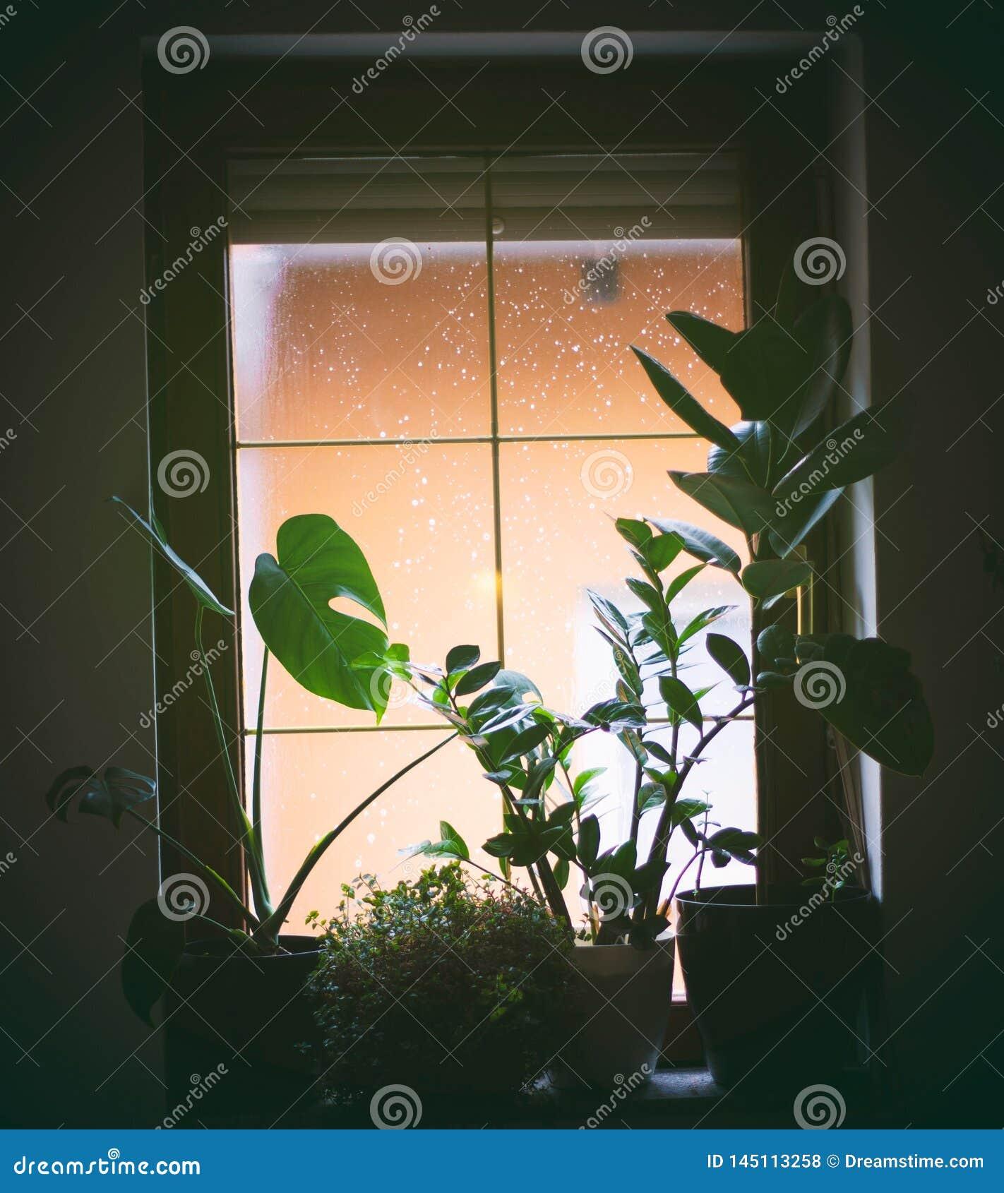 Cielo de observación de la ventana