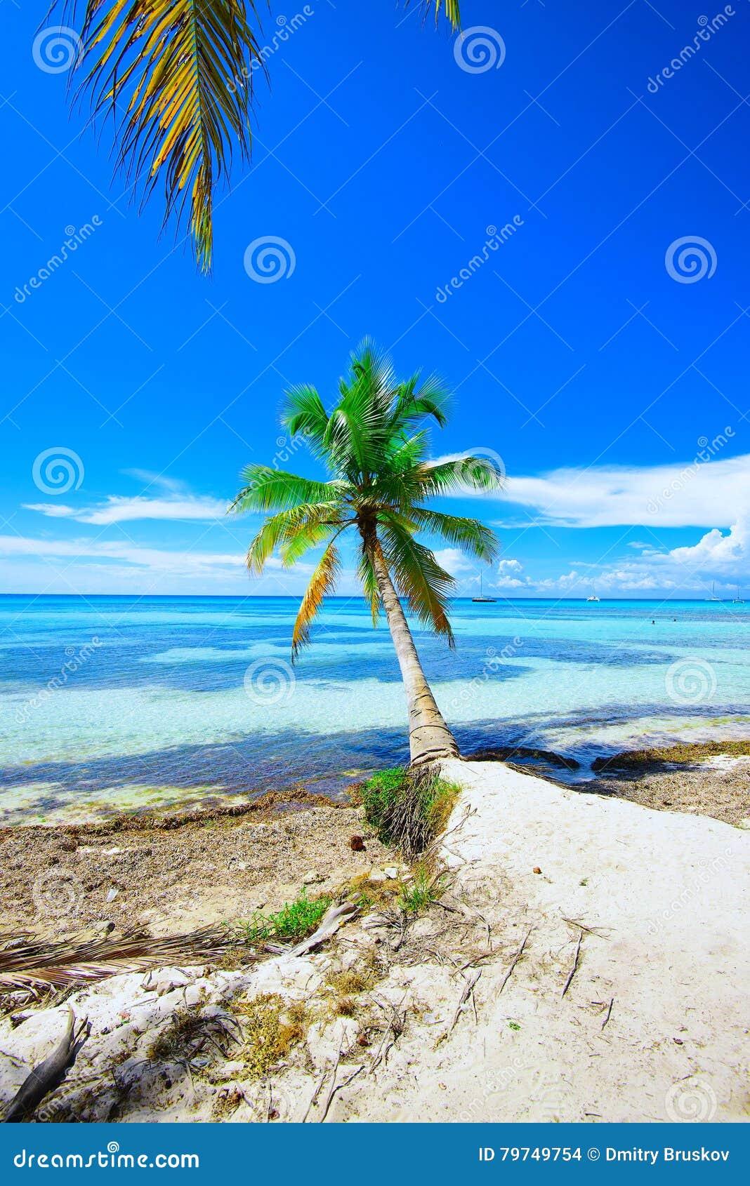 Cielo del océano de la palma