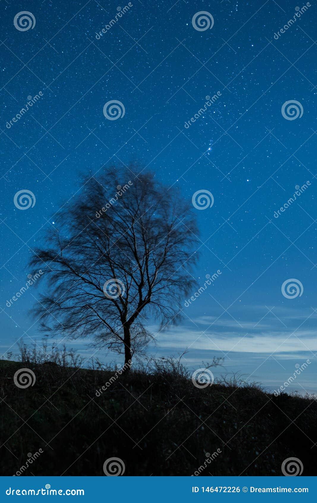 Cielo estrellado de UnderA del árbol solitario