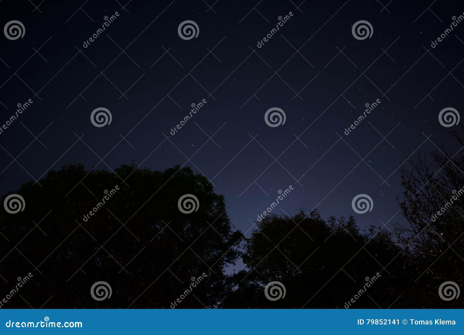 Cielo notturno con incandescenza della luce della città sopra gli alberi della siluetta