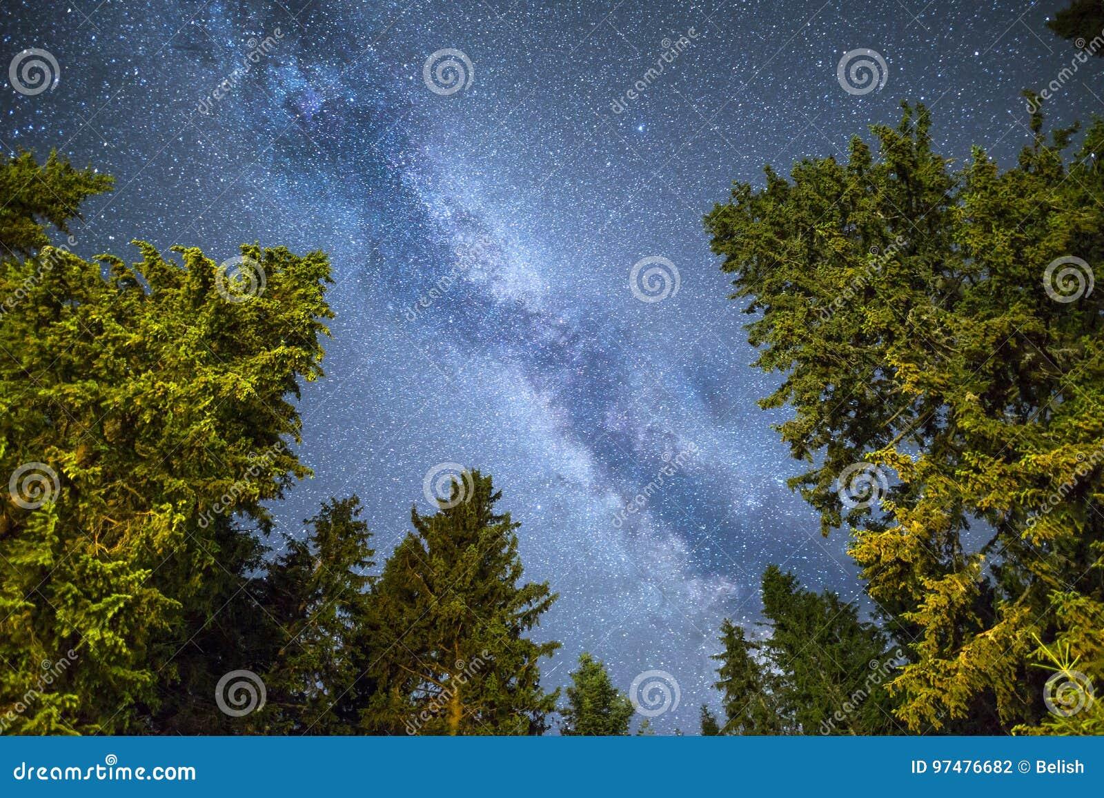 Cielo notturno della Via Lattea della siluetta dei pini
