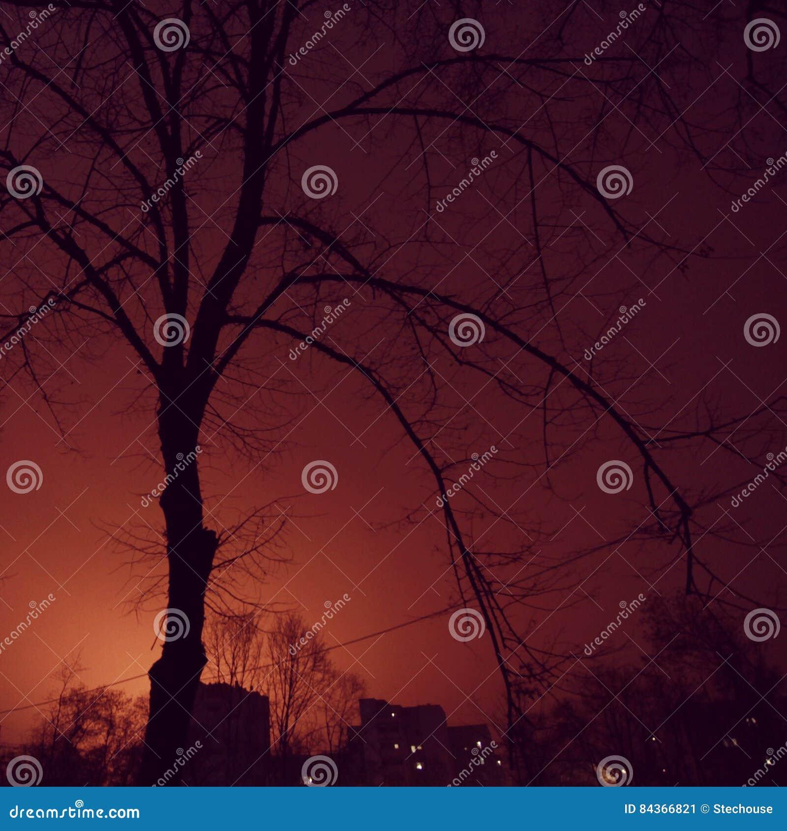 Cielo Rosso Di Notte.Cielo Rosso A Piacere Del Marinaio Di Notte Immagine Stock