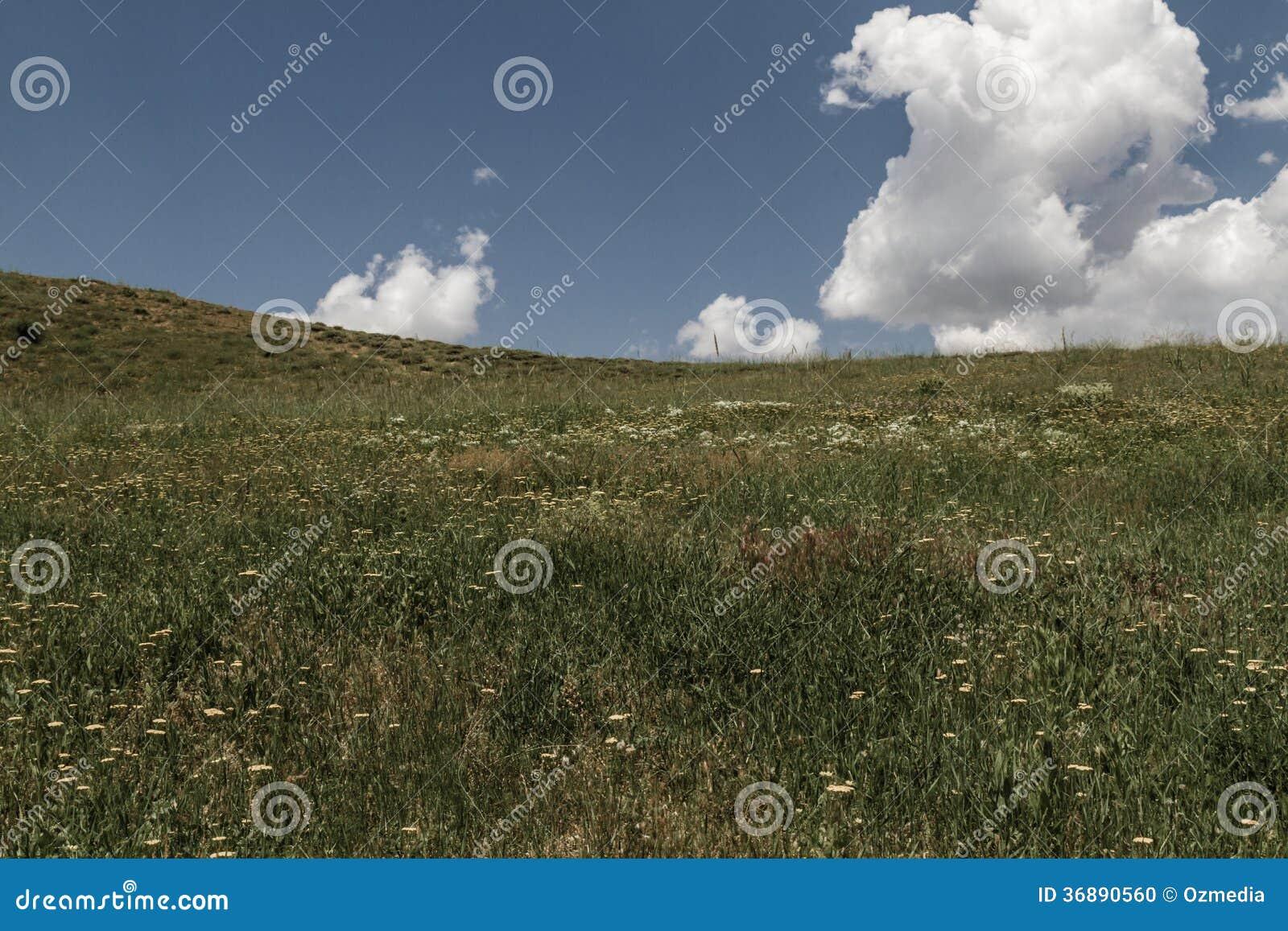 Download Cielo in un campo rurale fotografia stock. Immagine di prato - 36890560