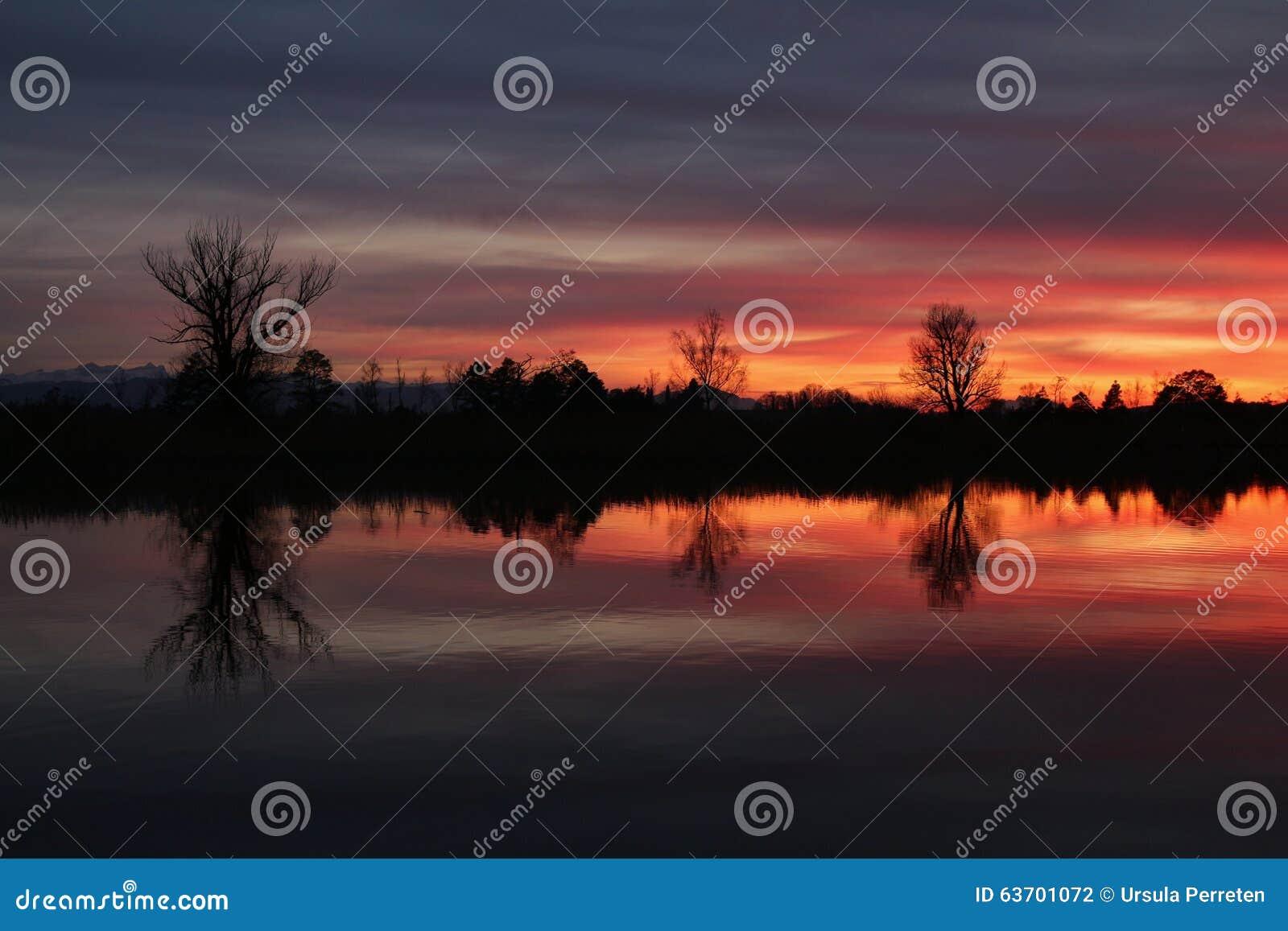Cielo y árboles coloridos de la tarde en el lago Pfaffikon