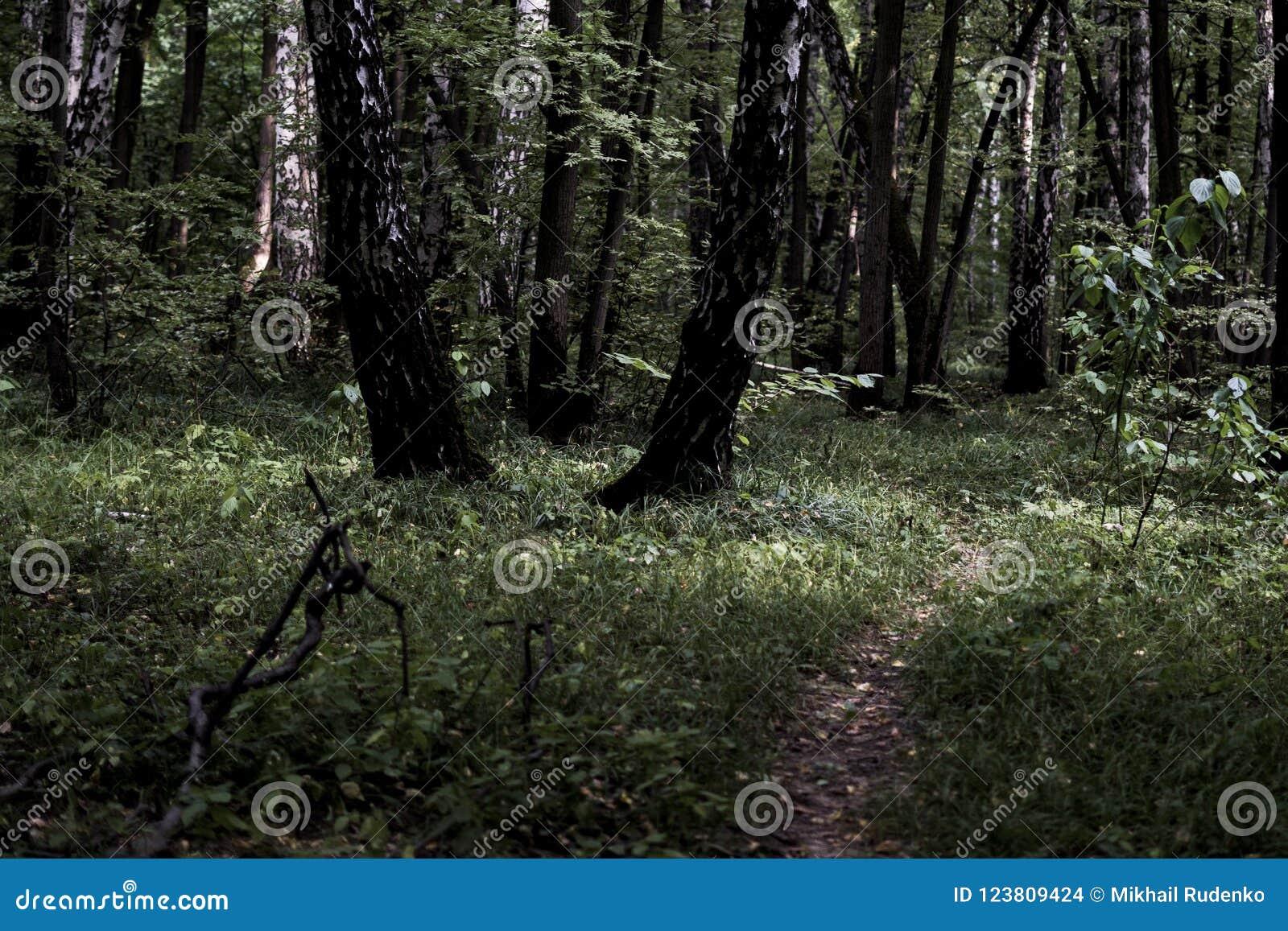 Ciemna markotna mglista ciężka lasowa ścieżka z wiele drzewami