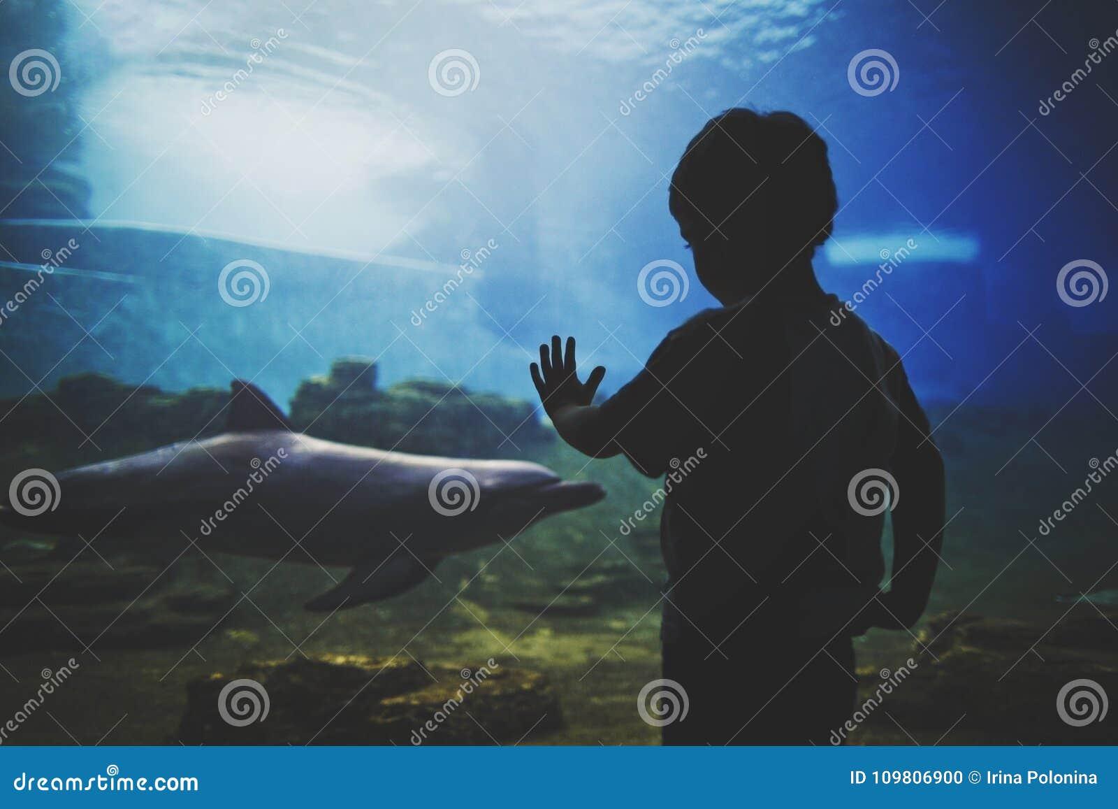 Ciemna sylwetka chłopiec przed dużym akwarium z delfinem w błękitne wody