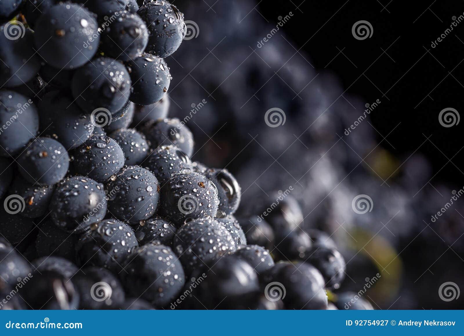 Ciemna wiązka winogrono w niskim świetle na czarnym tle, makro- strzał, woda opuszcza
