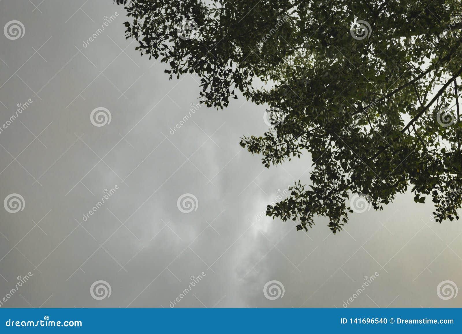 Ciemne podeszczowe chmury tworzy nad drzewa