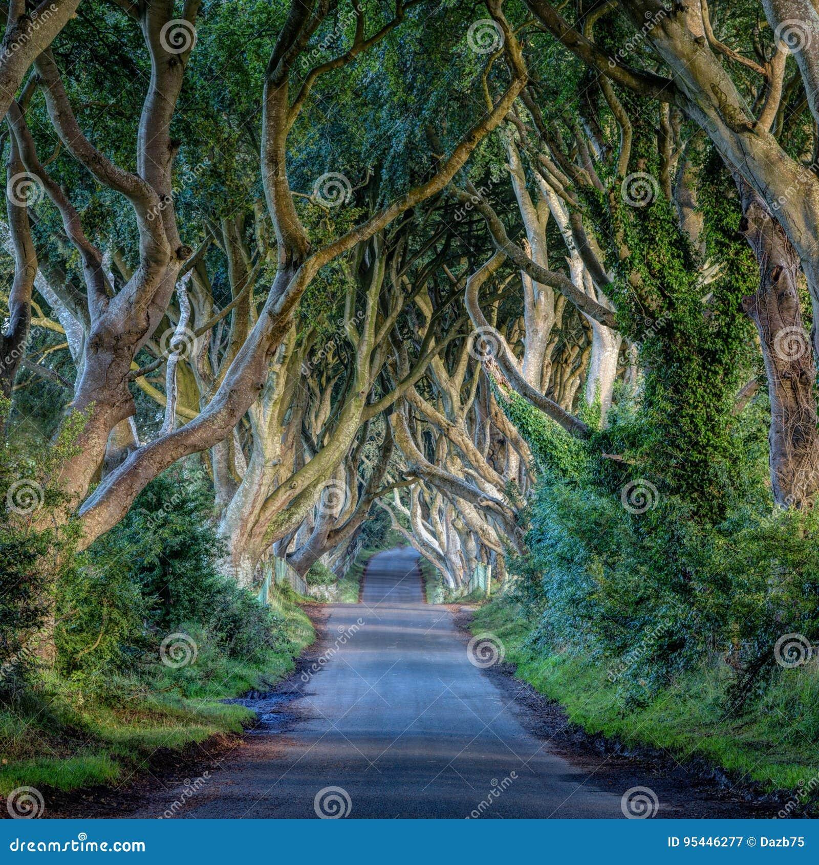 Ciemni żywopłoty, Irlandia krajobraz