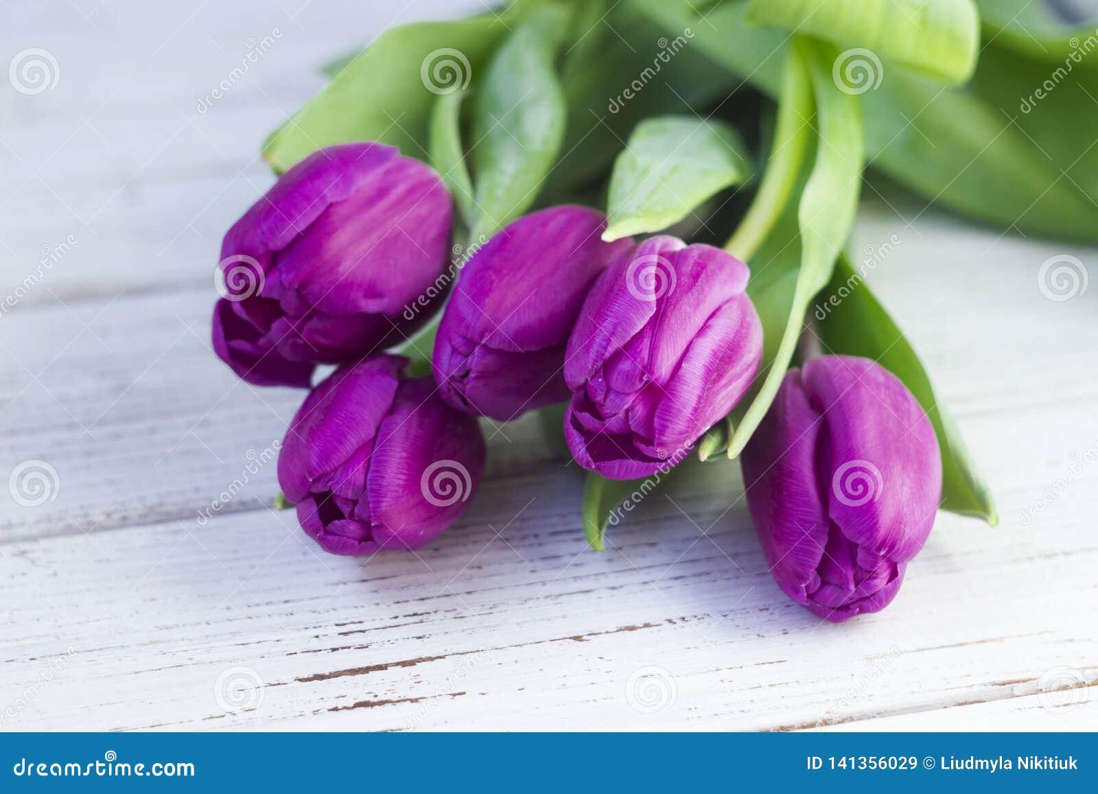 Ciemni lili tulipany pakuje na białym drewnianym tle w klingerycie