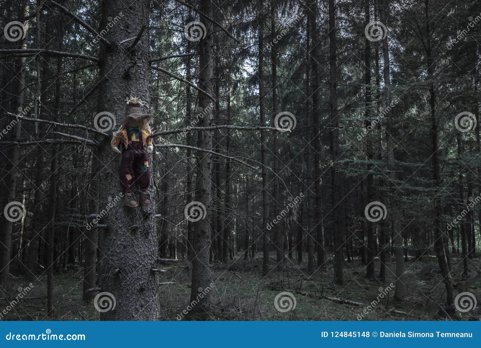 Ciemny las i strach na wróble w wysuszonym drzewie