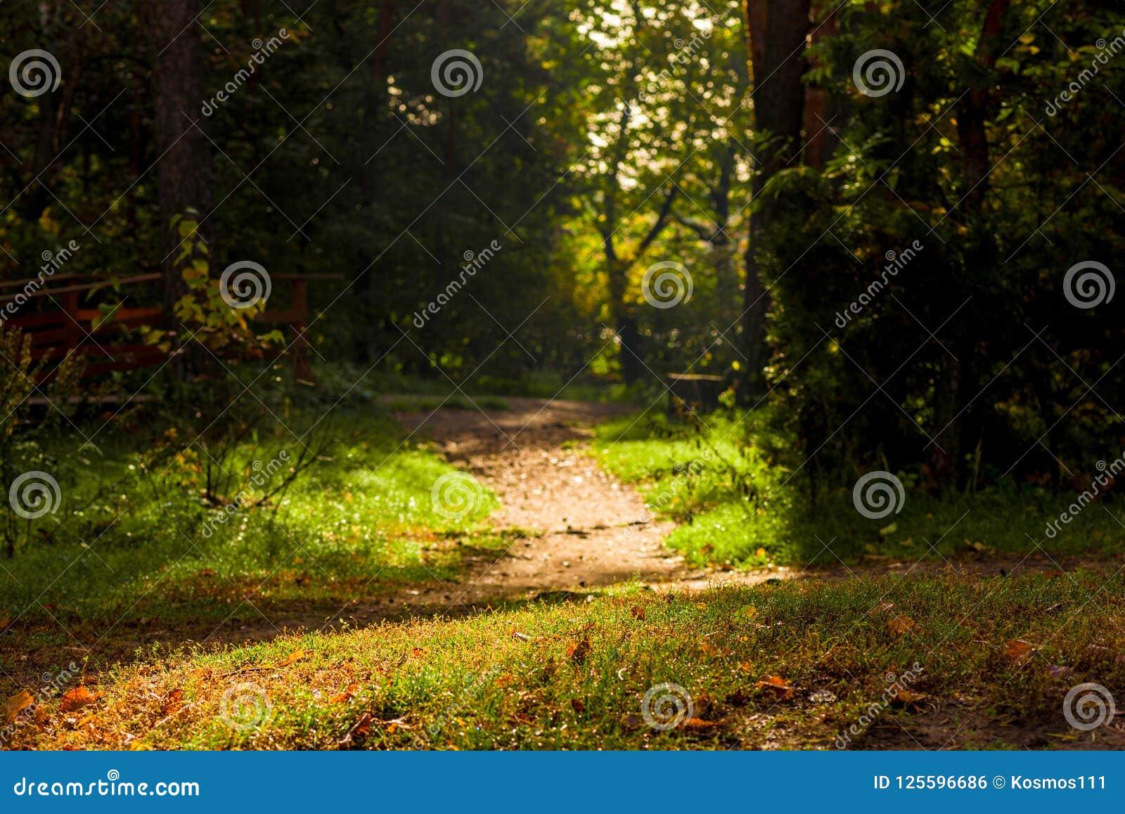 Ciemny ponuractwo krajobraz - lasowa ścieżka