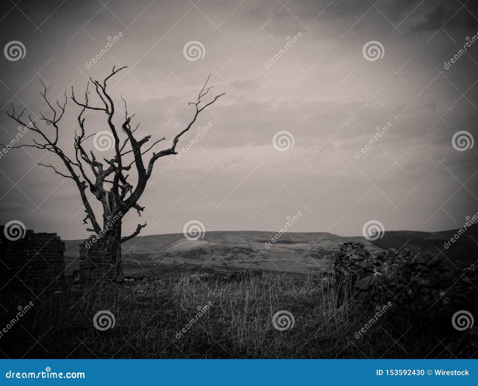 Ciemny przerażający drzewo w lasu strzale w czarny i biały - doskonalić dla horrorów tło i artykułów