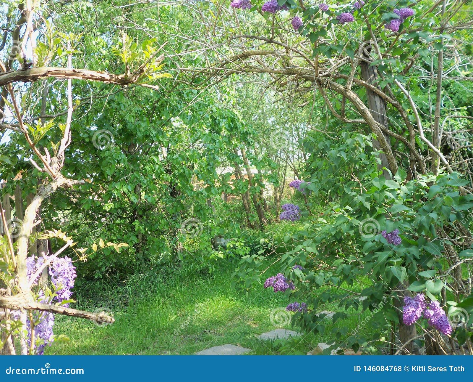 Cienie zielone purpury i brąz