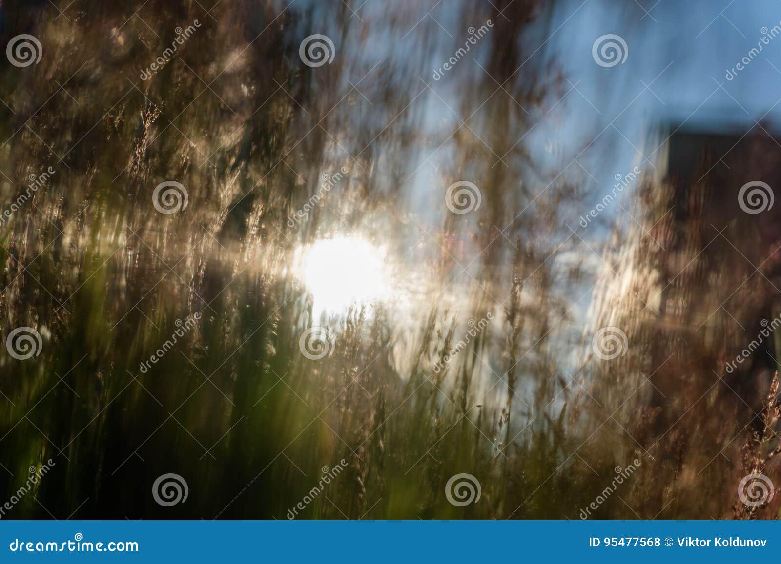 Cienki trawy zakończenie na pogodnym tle