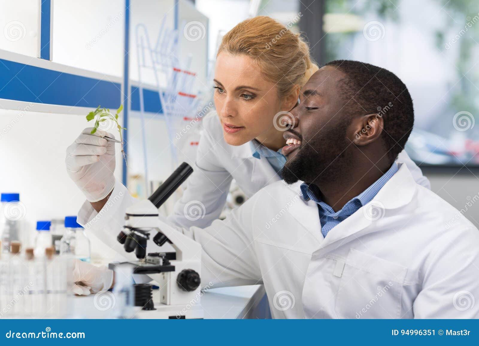 Científicos que miran la muestra de planta que trabaja en el laboratorio de la genética, par de la raza de la mezcla de investiga