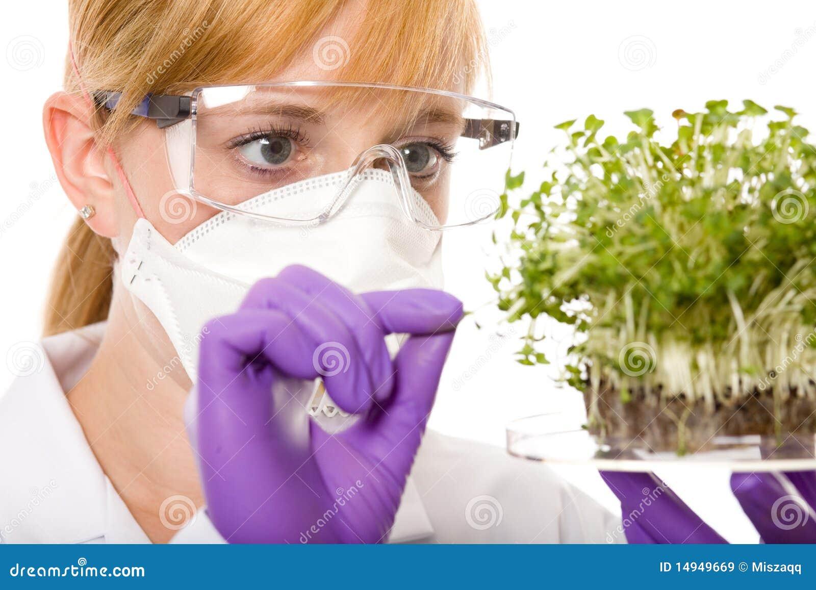 Cientista fêmea que olha a amostra da planta