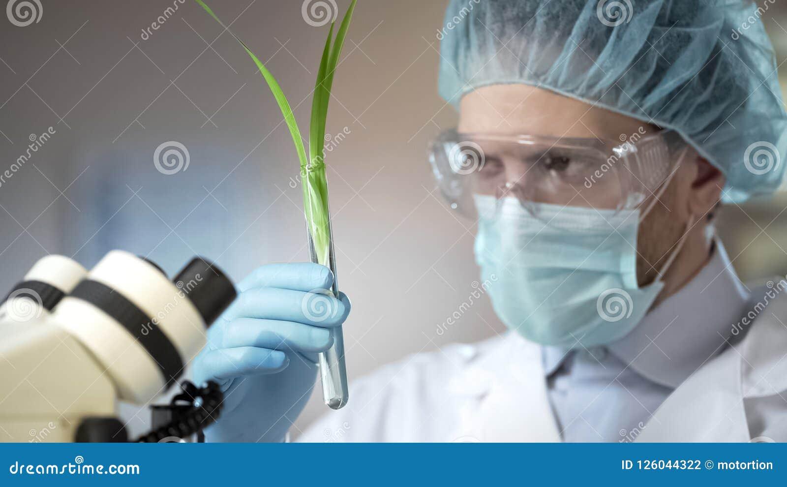 Cientista que olha a planta, feita descoberta científica na biologia, inovação