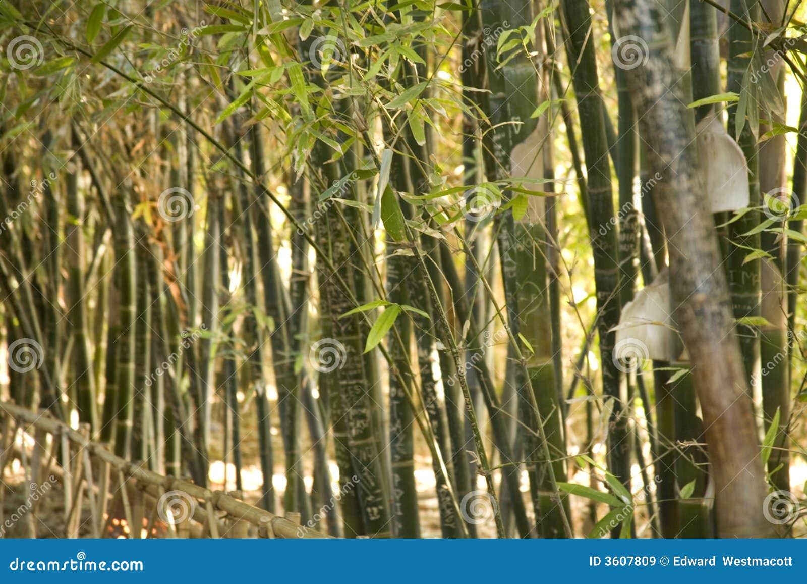 Cierre de bamb del seto para arriba im genes de archivo - Seto de bambu ...