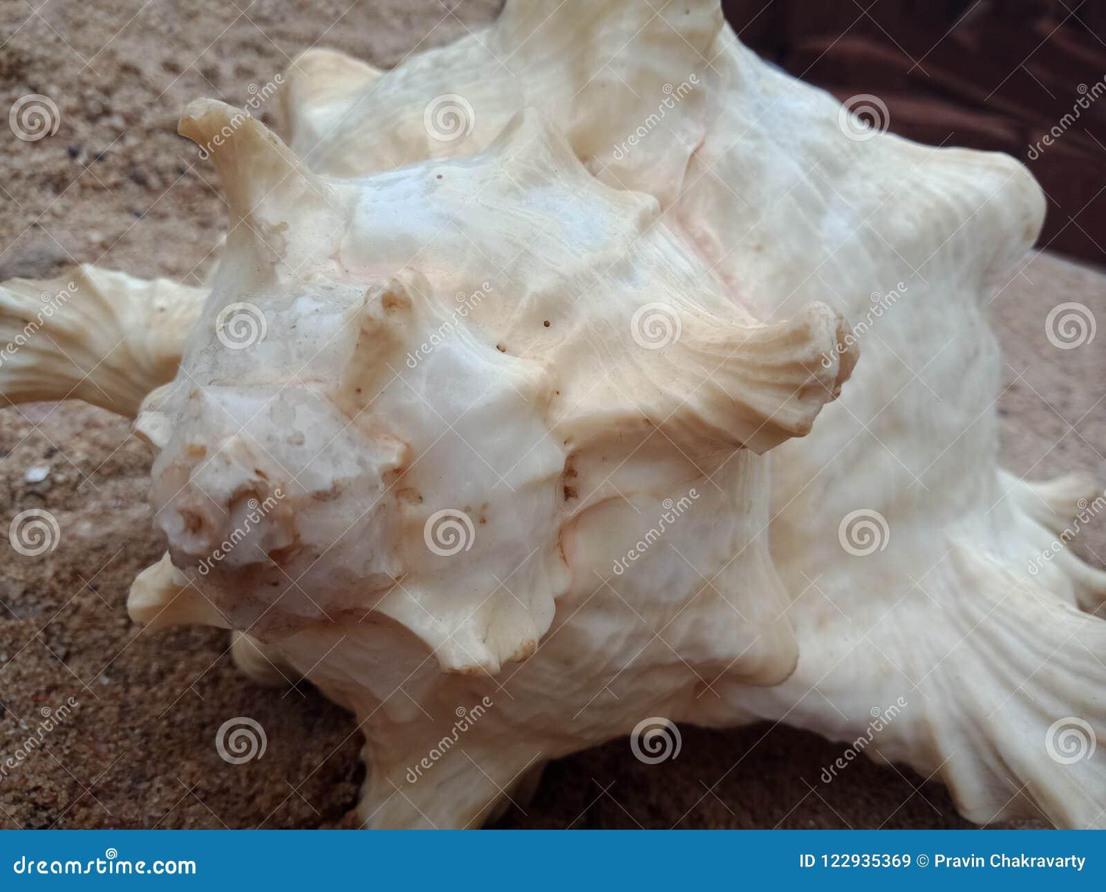 Cierre de la cáscara del mar para arriba en la arena, papel pintado texturizado del fondo,