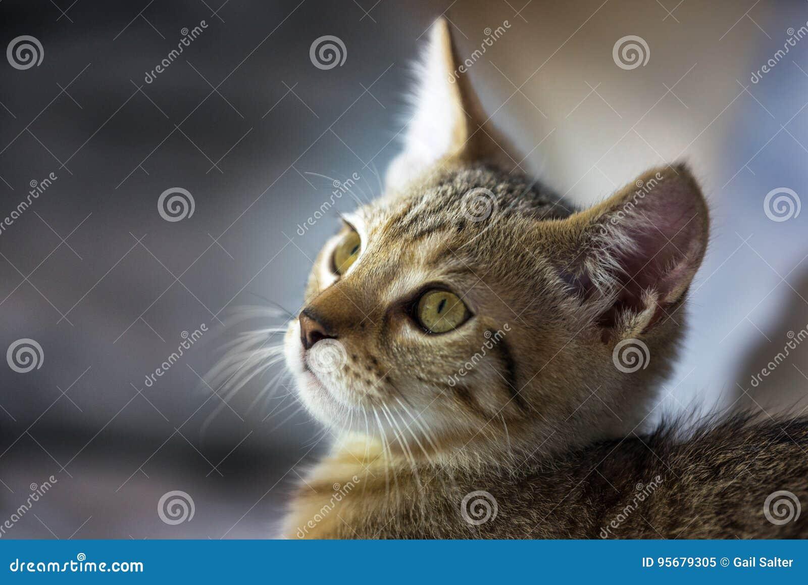 Cierre de la cara del gatito para arriba
