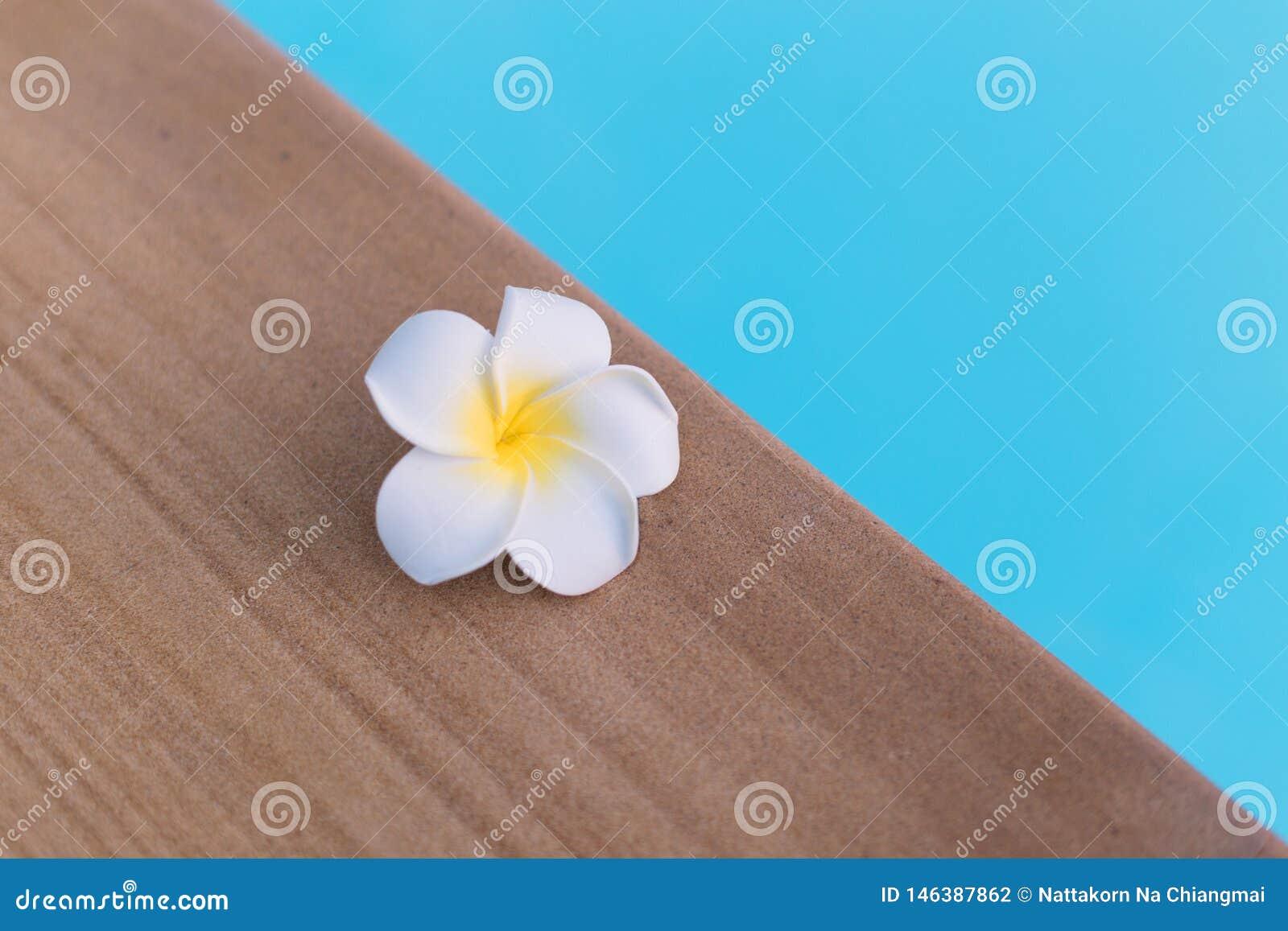 Cierre encima de la flor blanca del Plumeria en el borde de la piscina