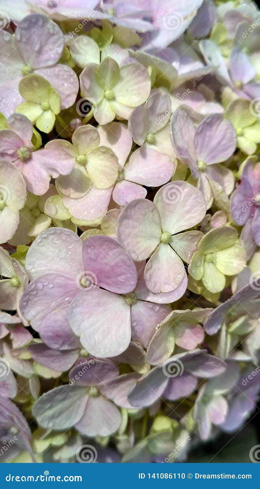 Cierre encima de las flores florecientes