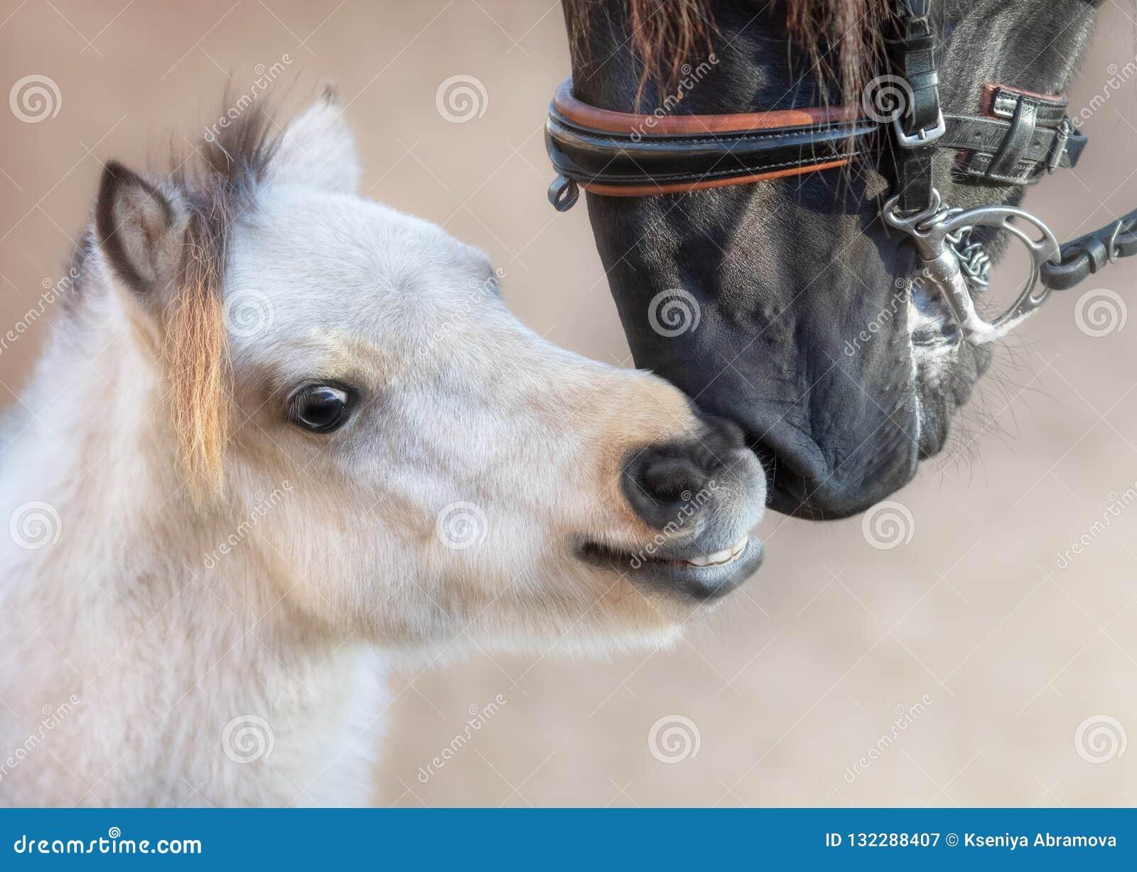 Cierre encima del caballo andaluz grande del retrato y del caballo miniatura
