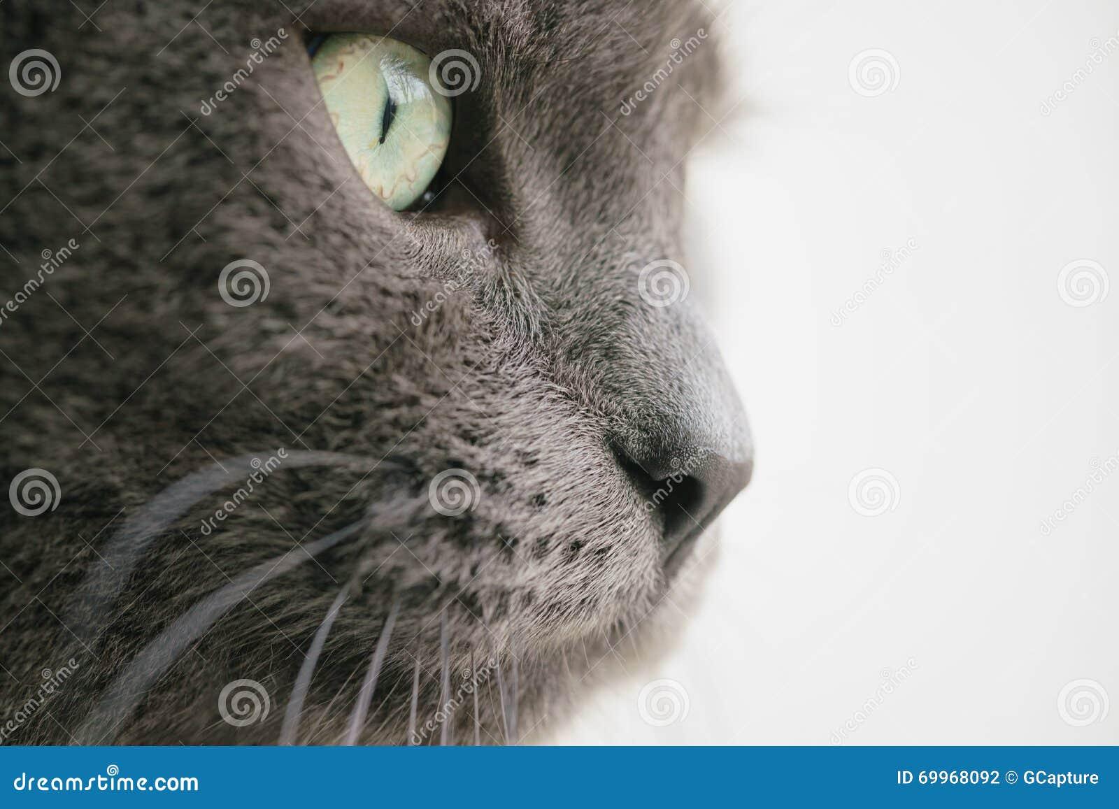 Cierre gris del retrato del gato encima de la foto
