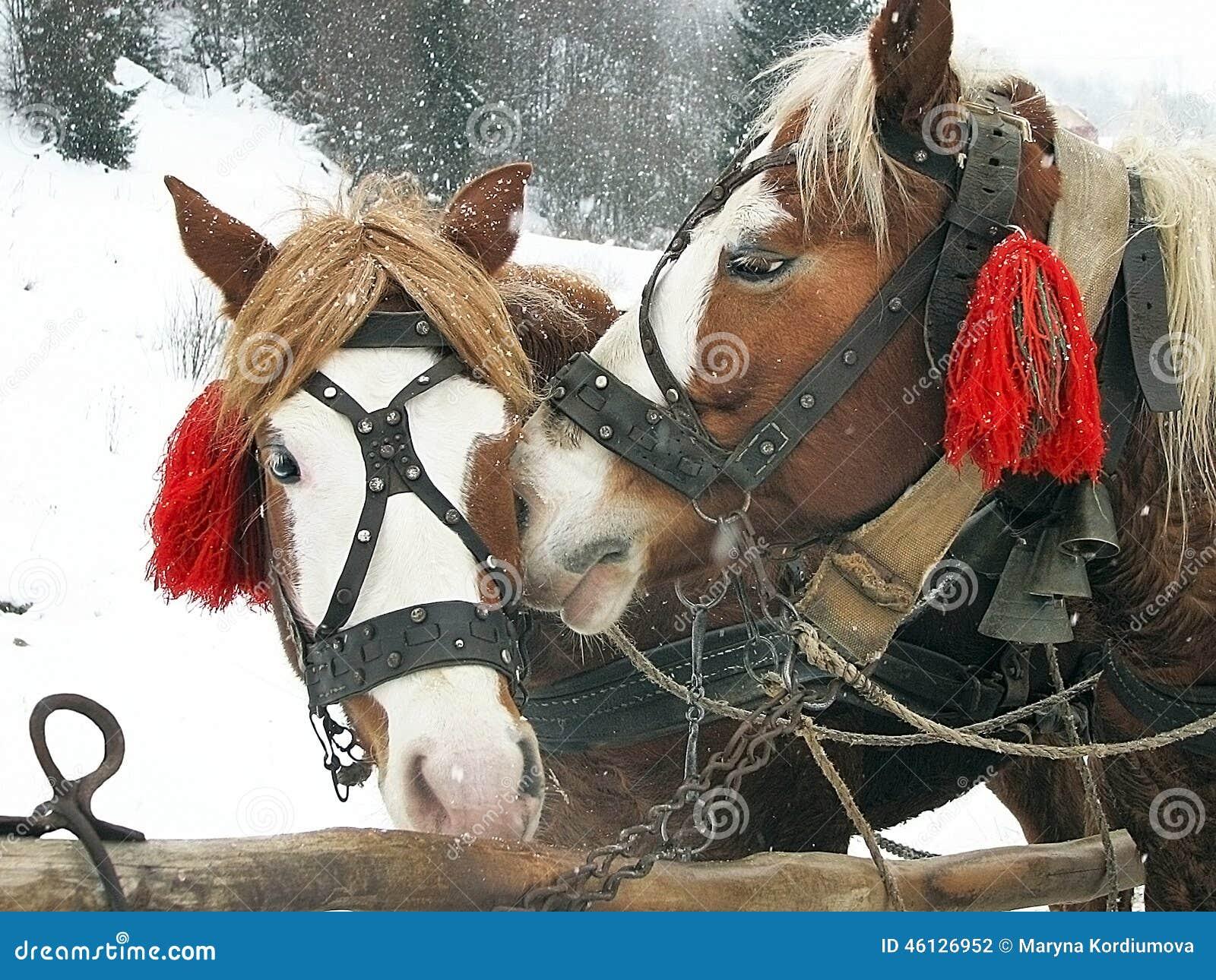 Cierre para arriba de las cabezas de caballos con las - Cabezas de animales decoracion ...