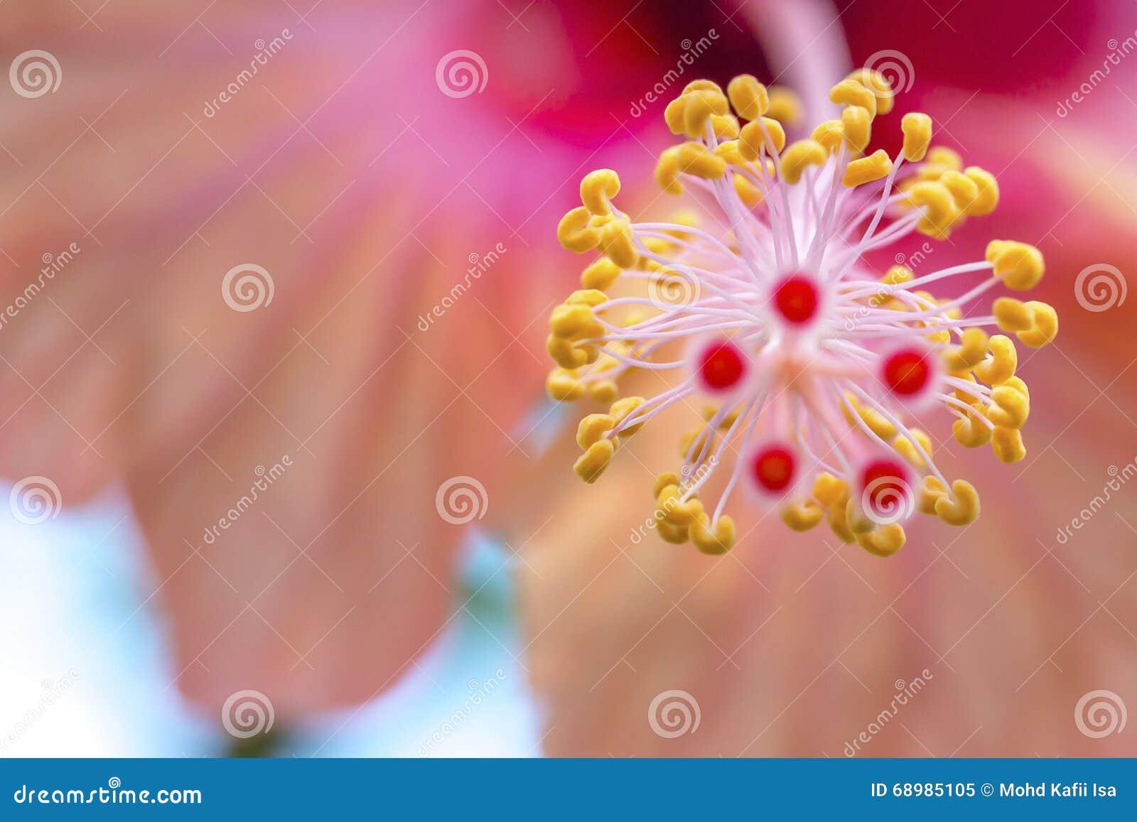 Cierre para arriba de las flores en el cielo de la tarde