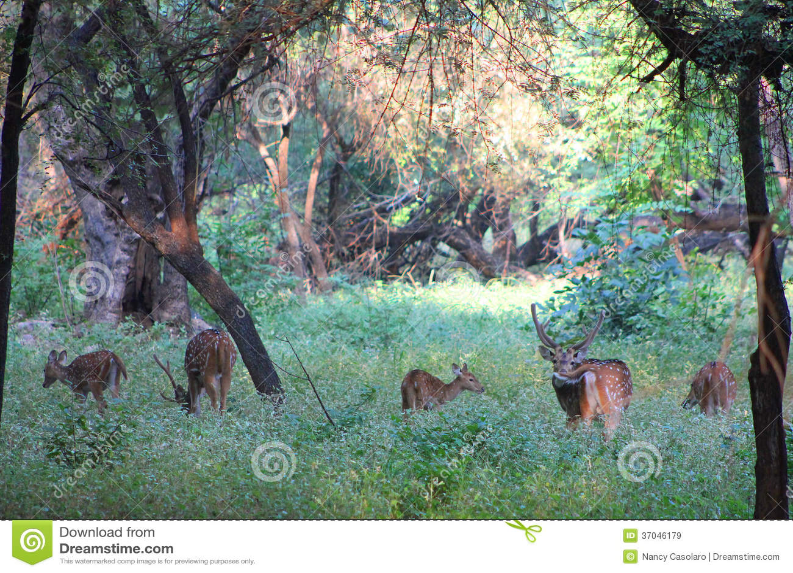 5 ciervos
