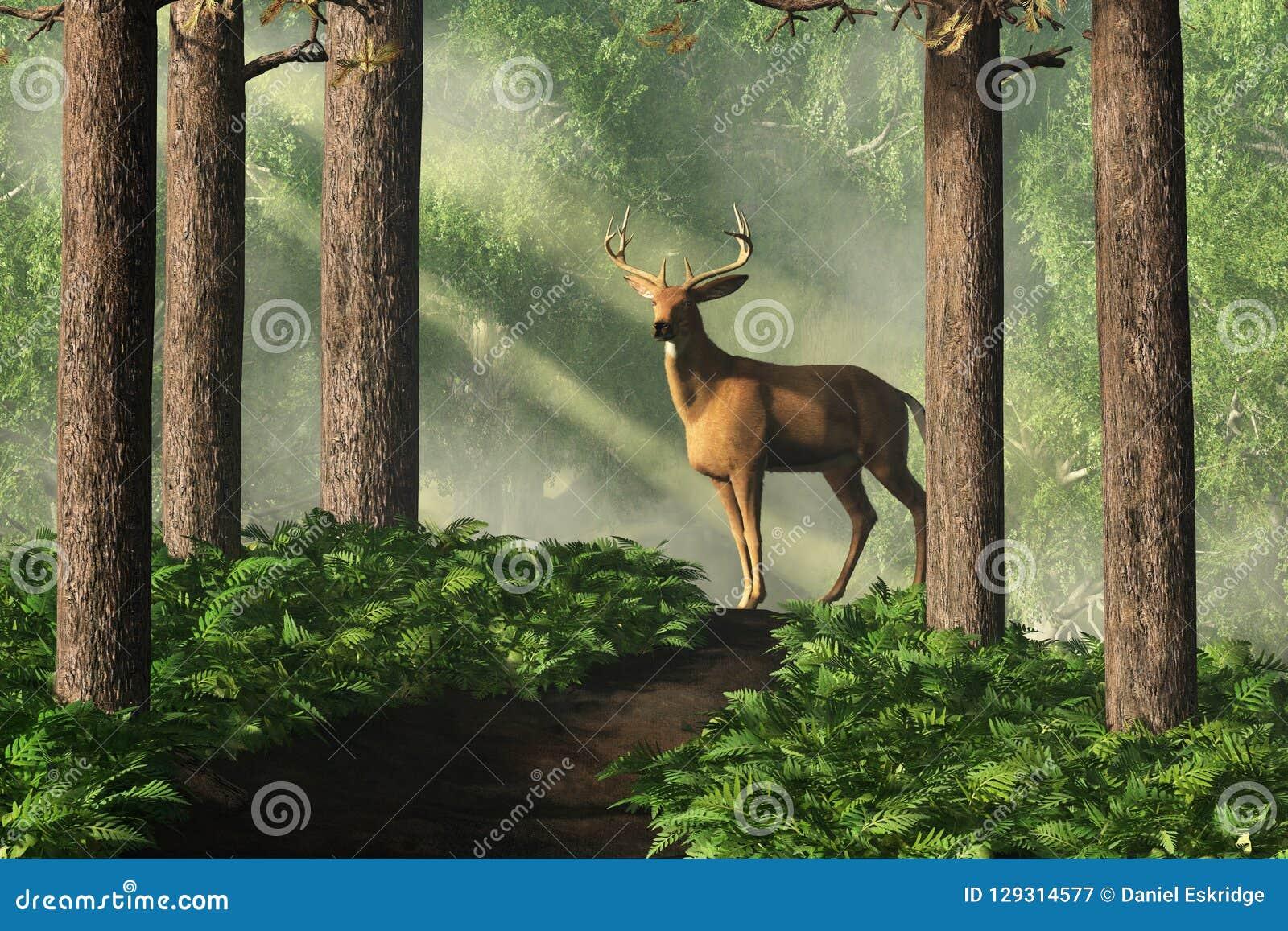 Ciervos en Forest Path