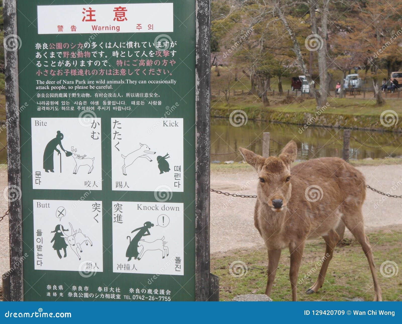 Ciervos en Nara Park, Japón