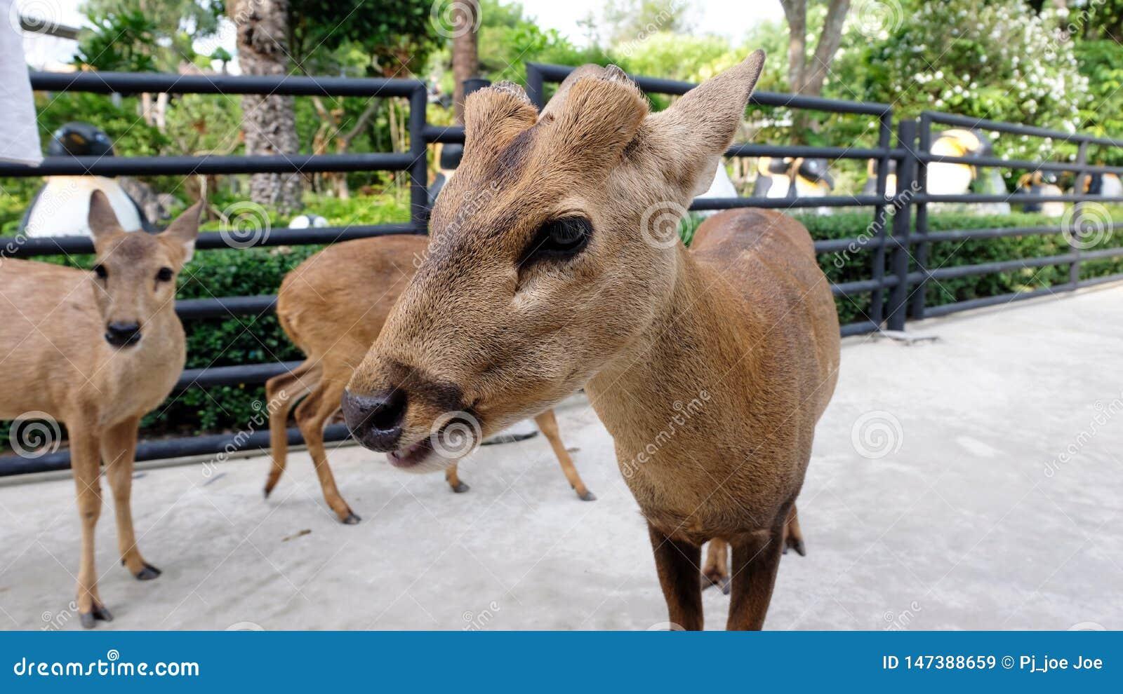 Ciervos salvajes de la alimentaci?n infantil en el zoo-granja Animales de la alimentaci?n de los ni?os en el parque al aire libre