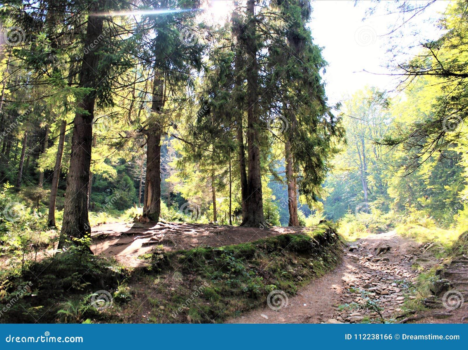 Cieszy się twój podróż z Carpathians górami, piękno wioska