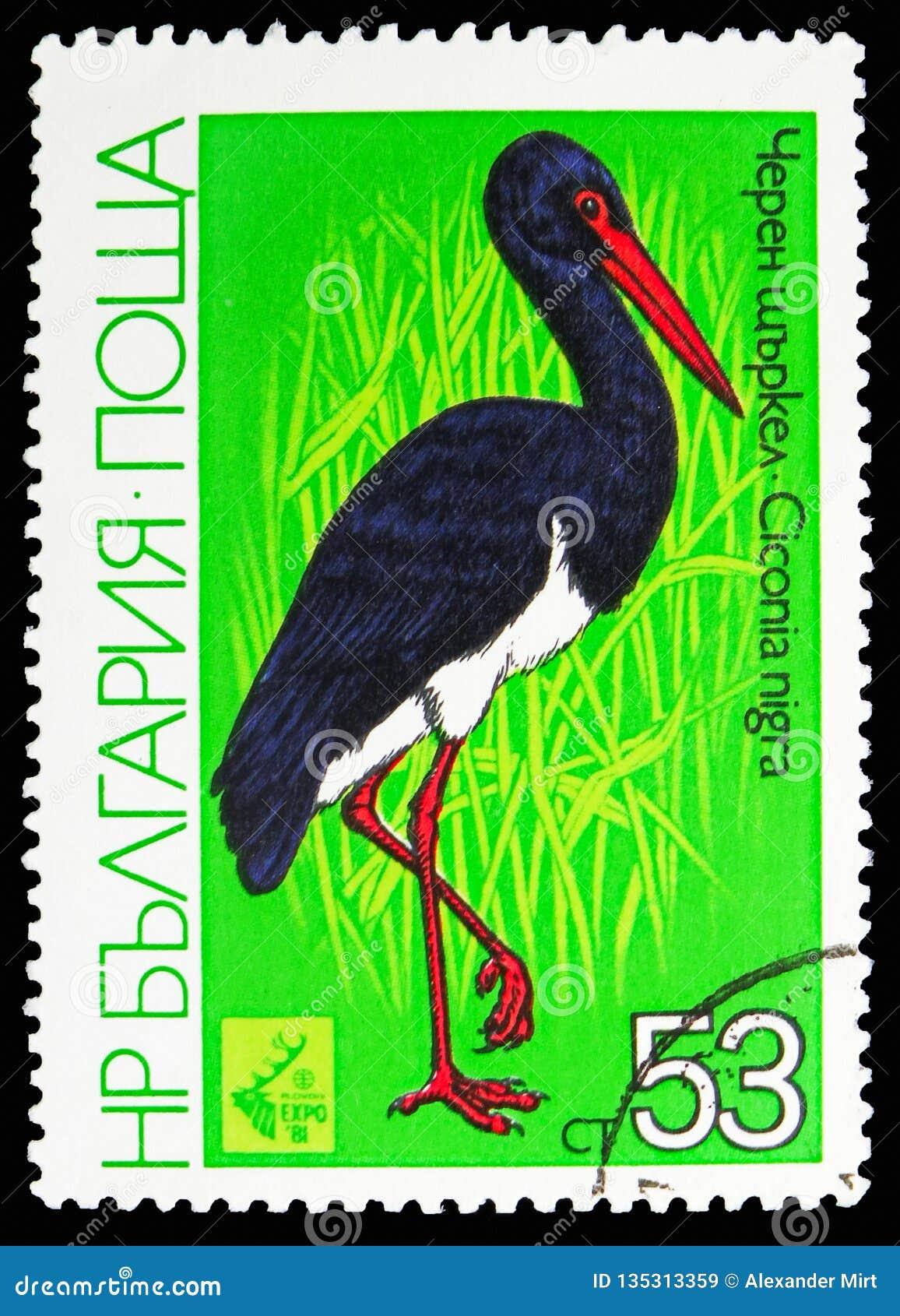 Cigüeña negra (nigra) del Ciconia, EXPO de búsqueda internacional '81, Plovdiv de la exposición: Serie de las aves zancudas, circ