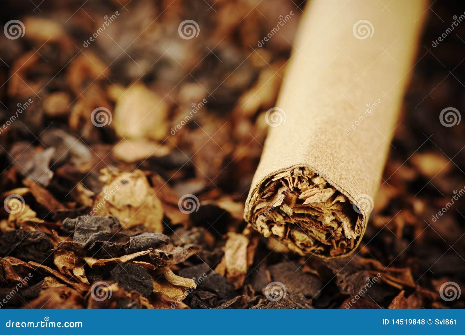 Cigarr och tobak