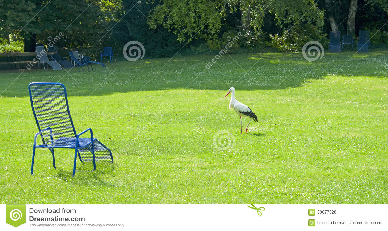 Download Cigogne Blanche (Ciconia) En Parc D'été Photo stock - Image du élégant, ornithologie: 63077928