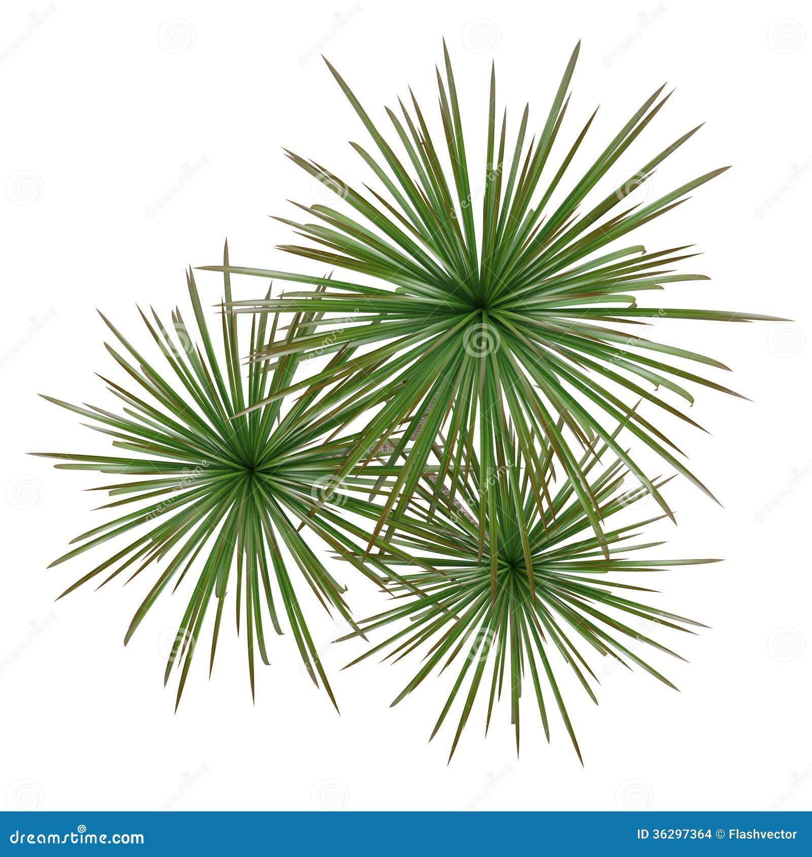 Cima dell 39 albero della pianta della palma illustrazione di for Pianta palma