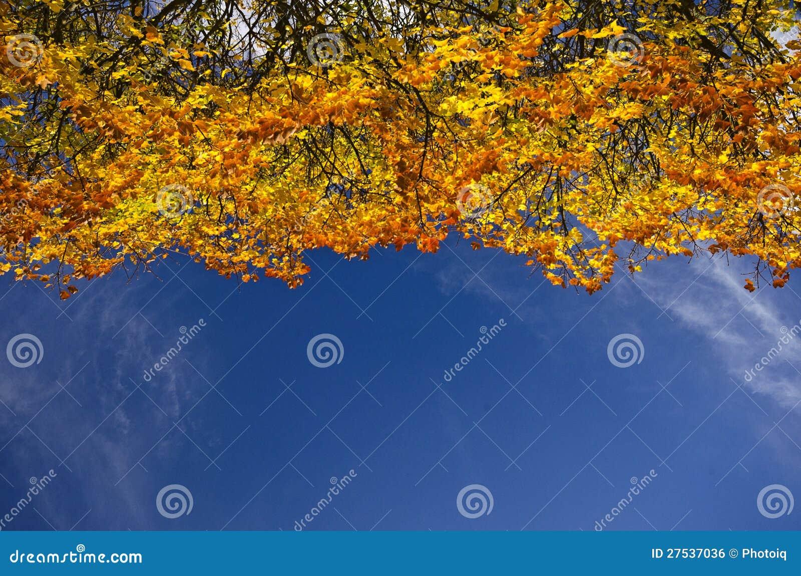 Cime d arbre colorée d automne contre un ciel bleu
