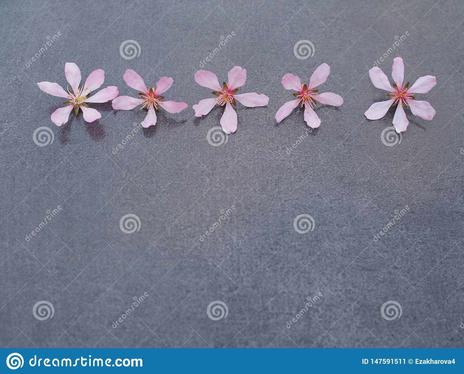 Cinco flores rosadas en un primer gris del fondo