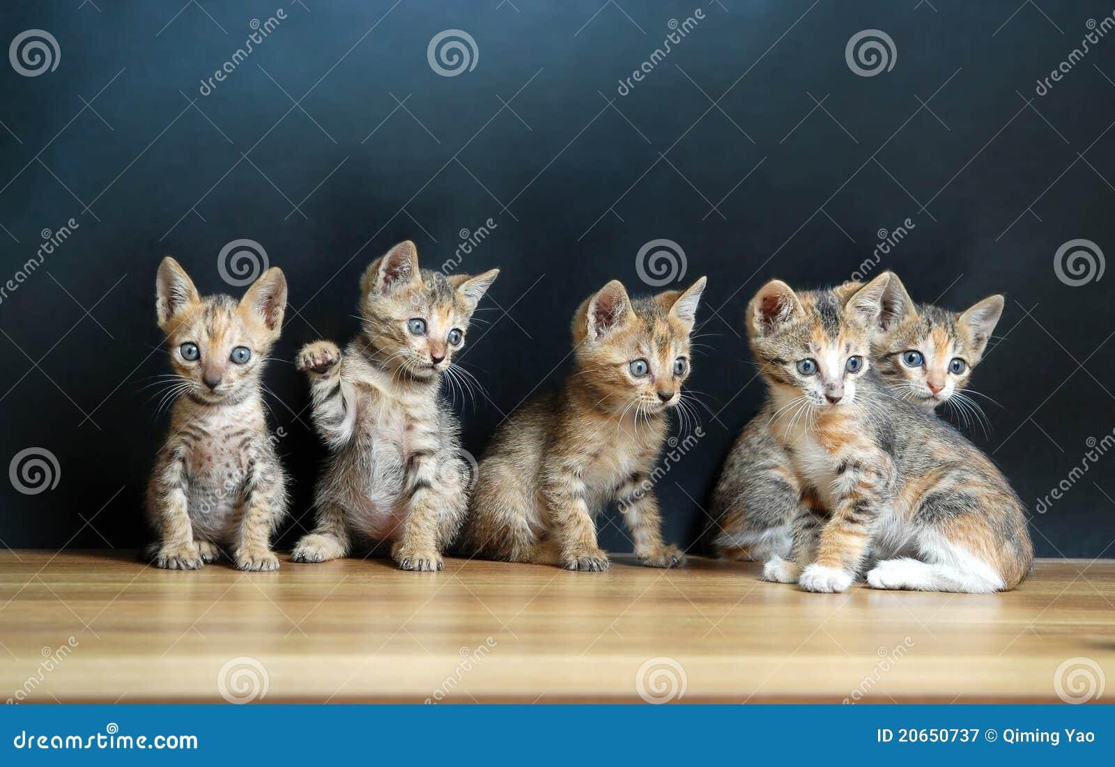 Cinco gatos lindos