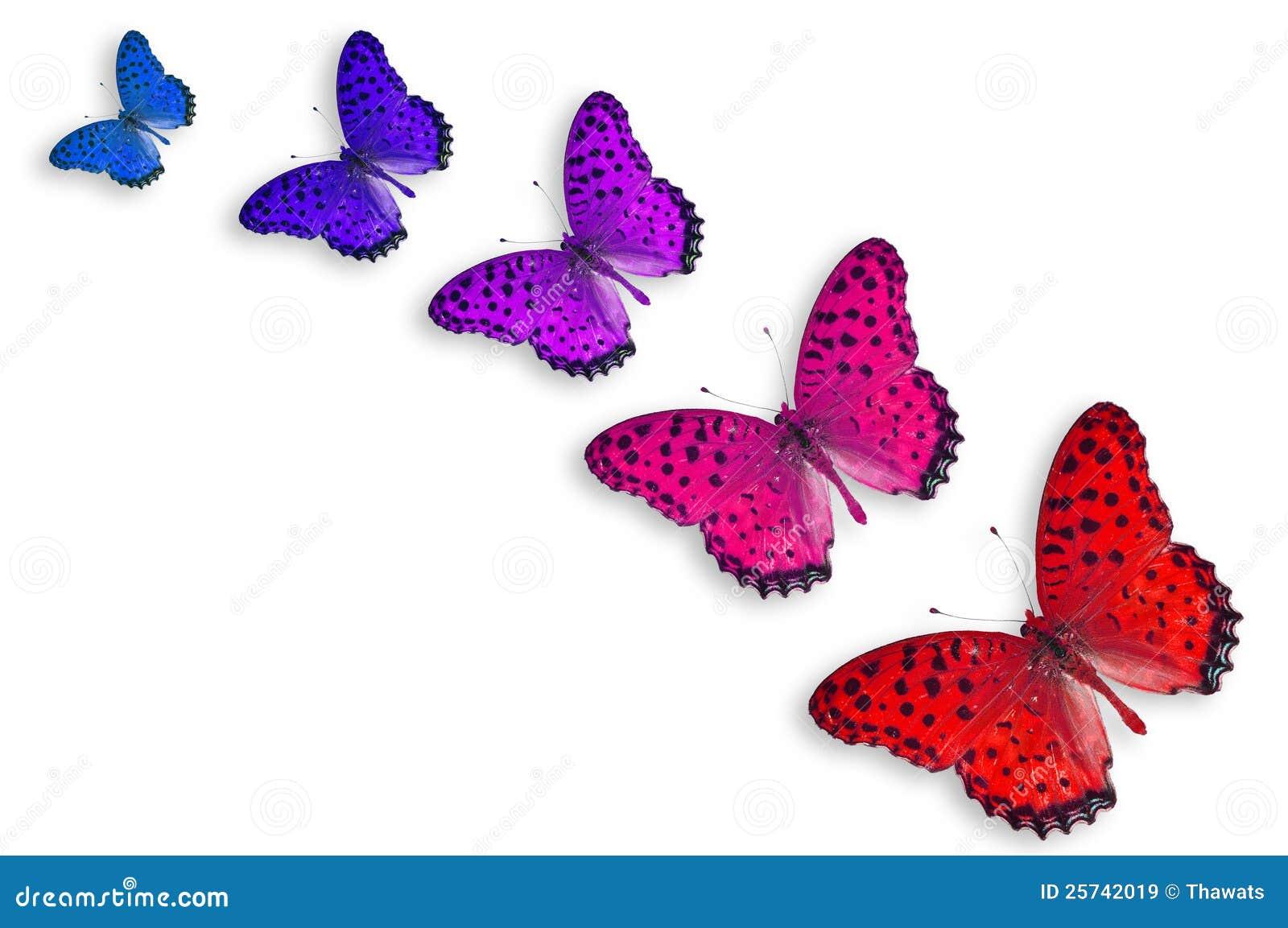 Cinco mariposas del color imagen de archivo imagen de - Imagenes de mariposas de colores ...
