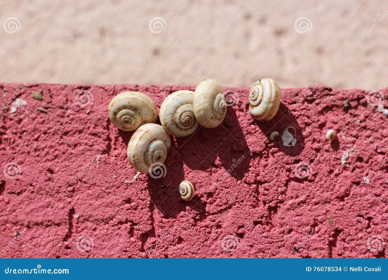 Cinq escargots de jardin blancs sur un mur rose