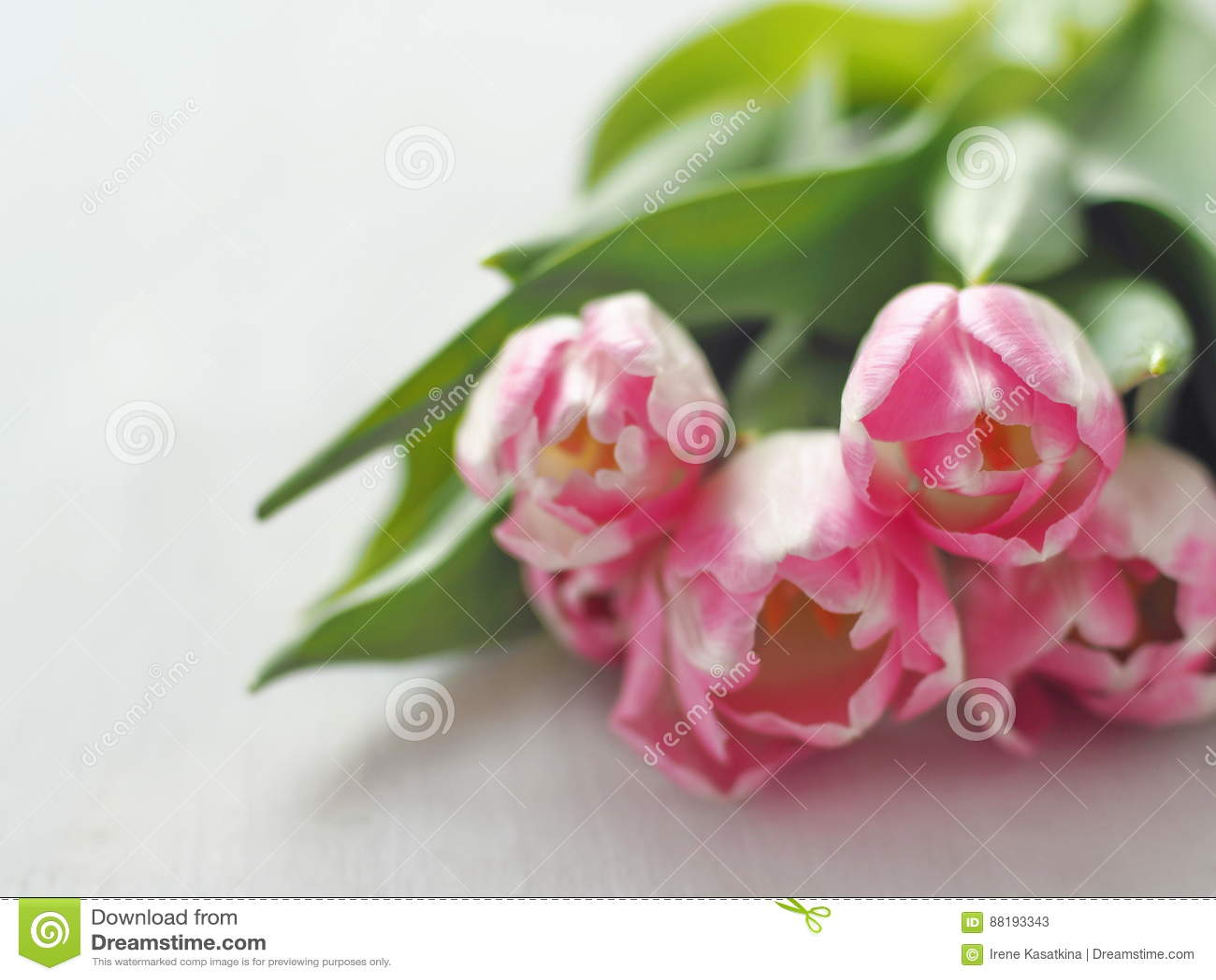 cinq tulipes roses disposées sur la table en bois blanche fond de