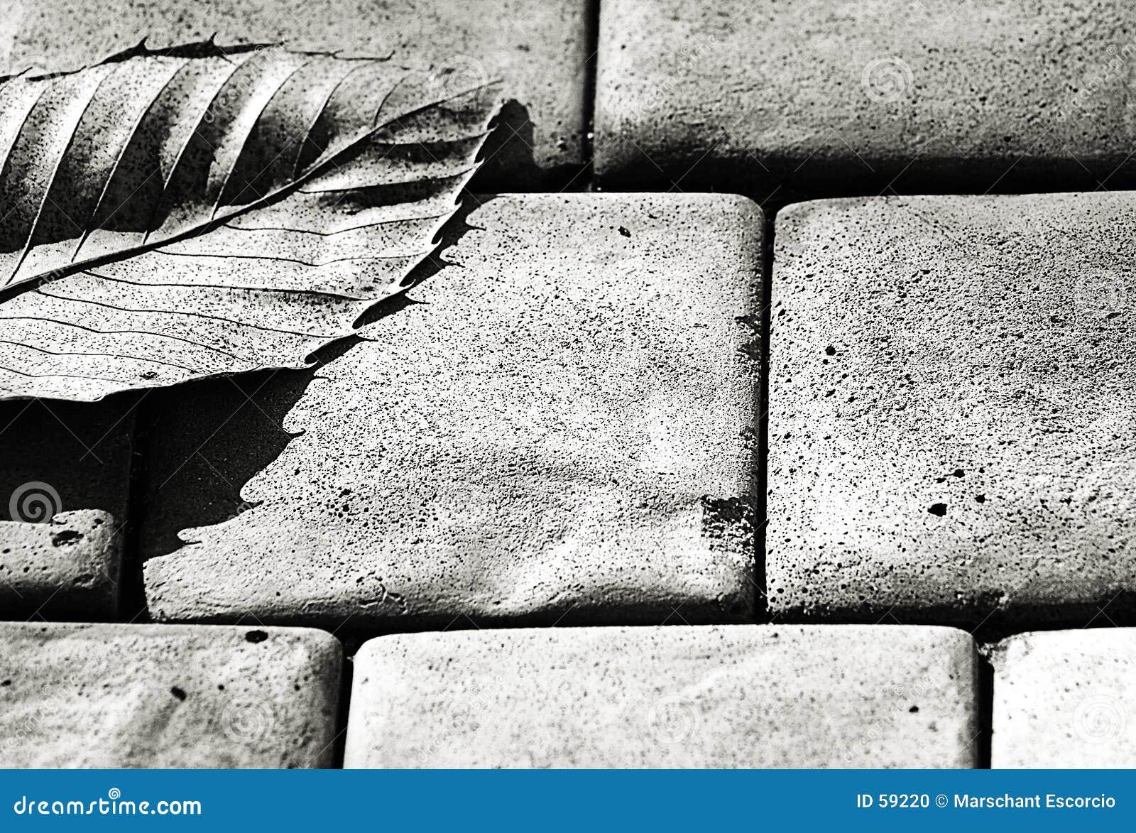 Cinzento - uma folha