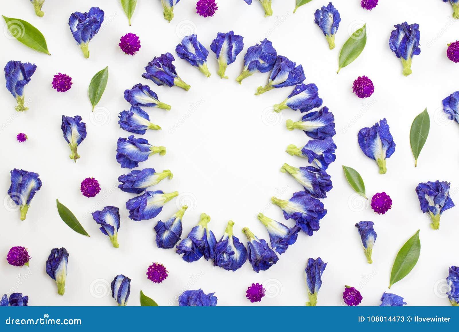 Circle Frame Of Blue Pea And Globe Amaranth Flowers Stock Image ...