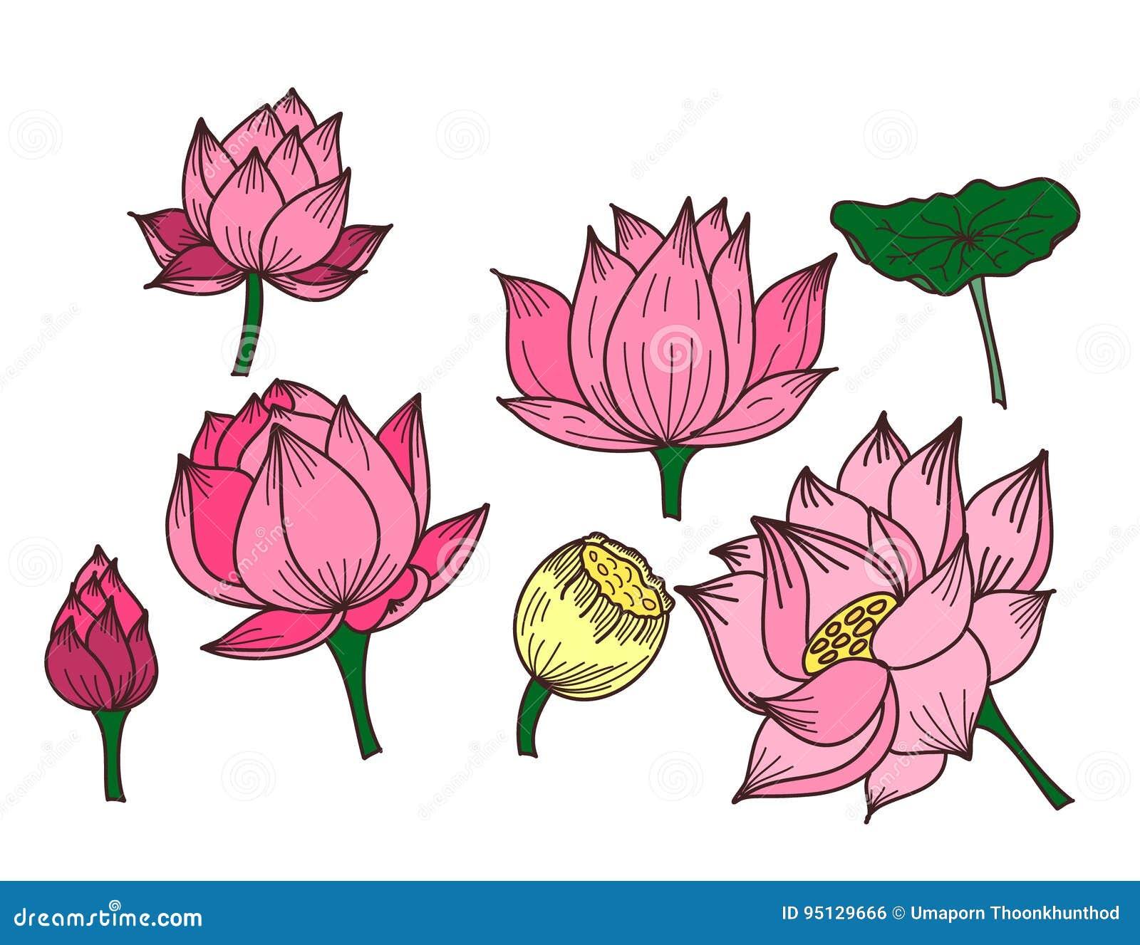Circle Hand Drawn Lotus Flower Stock Vector Illustration Of Circle