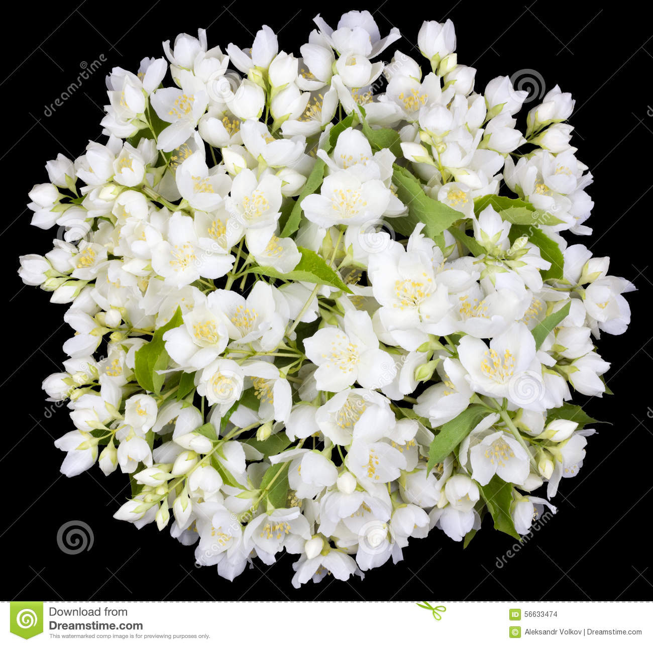 Circle From White Jasmine Flowers Stock Photo Image Of Bright